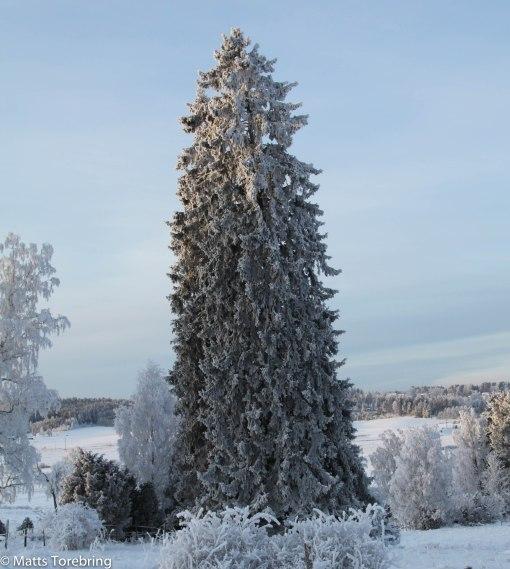 Ängs hagar Stalpabacken ned från Blå Grindar