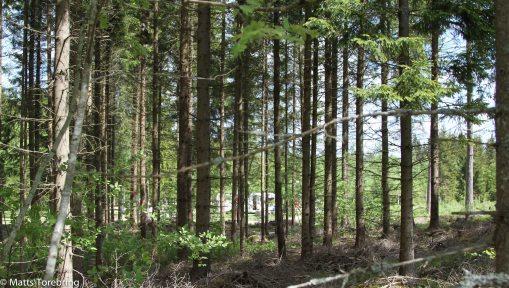 Jag har vandrat i skogen sedan jag kunde stå på egna ben