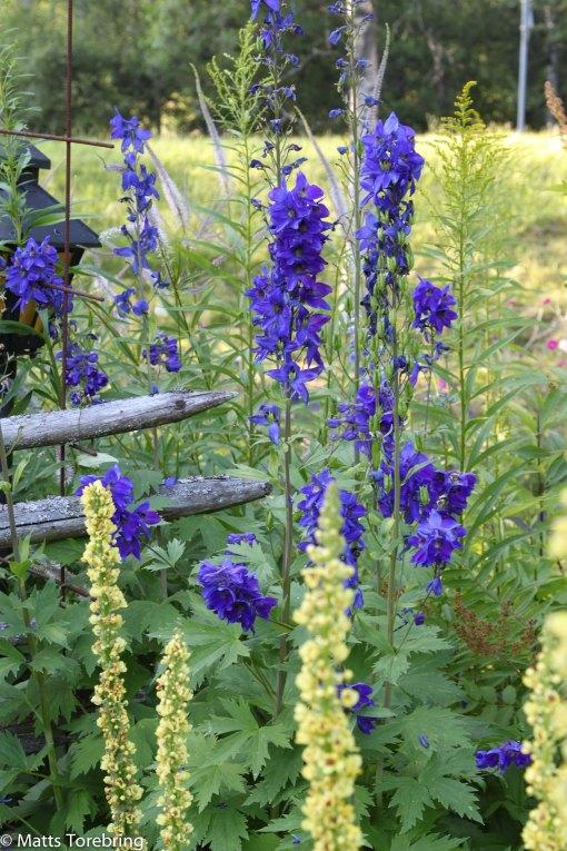 I Christer & Anitas trädgård