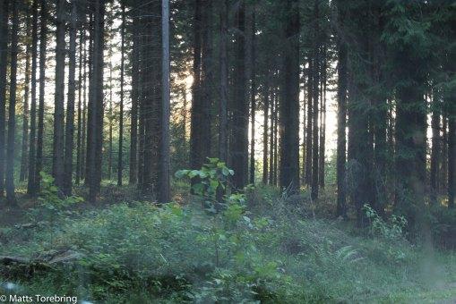 Nu är vi ute i skogen igen.