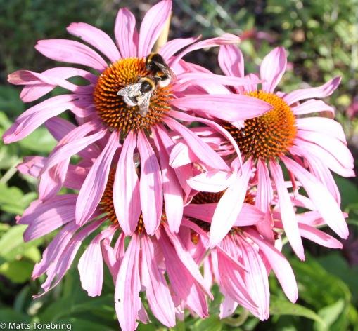 Varje blomma var full av bin