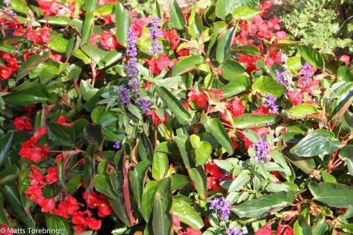Vilken tid det måste ta att sköta om alla blommor i denna stadspark.