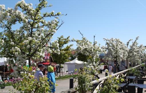 Vacker blomning inramade festen på torget