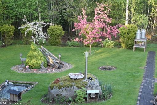 Två Paradisäppelträd översållade med blommor