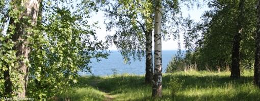 Mycket vacker natur på Villa Björkhagens Camping, men mycket eftersatt underhåll.