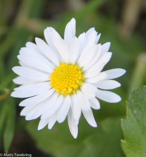 Experimentfoto blommor