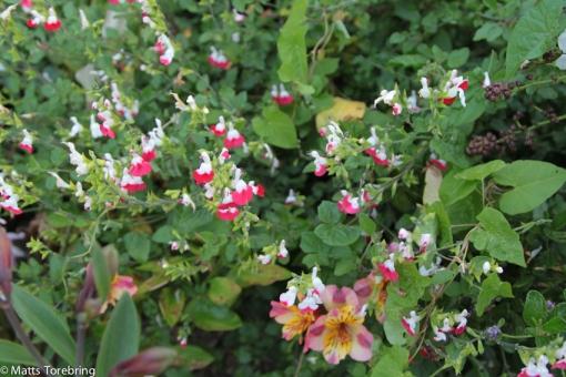Blommor utanför servicehusen