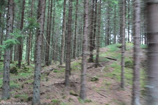 I stort sett bara skog hela vägen