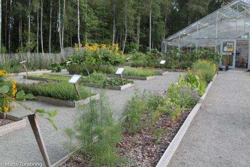 Det finns en stor örtagård att studera i anslutning till caféet