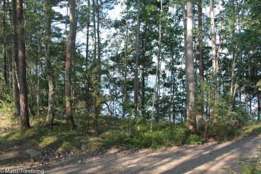 Jag älskar skogen (bara jag slipper arbeta iden) och vattnet