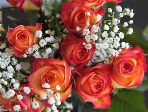 En liten rosbukett till min käraste på födelsedagen