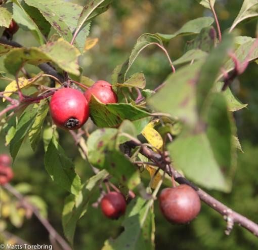 Översållat med frukter