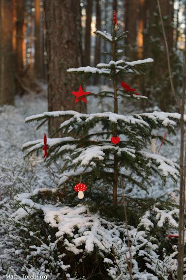 En liten julgran ett stycke in i skogen