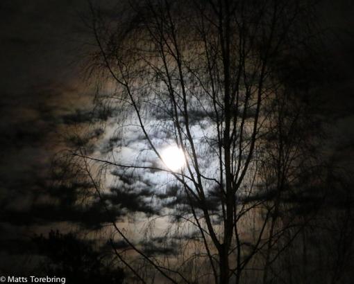 Månen har lyst bland molnen sista kvällarna