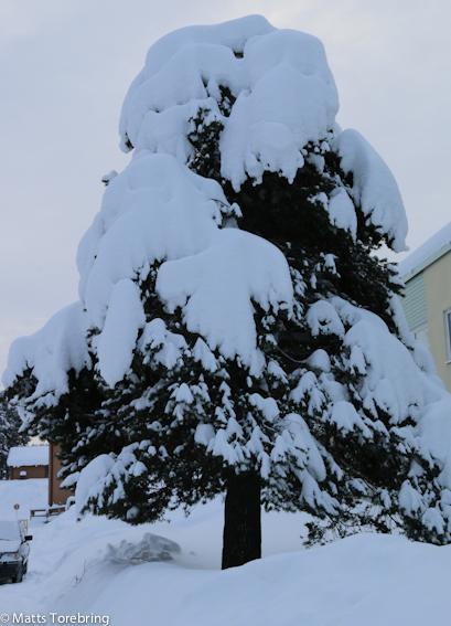 Snöskulpturerna är många i naturen