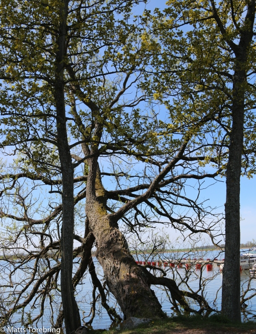 Ett träd på tre kvart