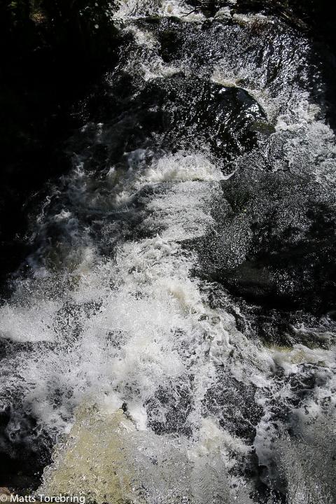 På sina ställen forsar vattnet genom skogen.
