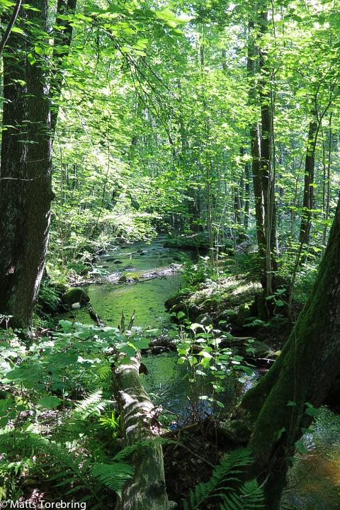 Så rofyllt att gå här och se vattnet flyta eller rusa fram.