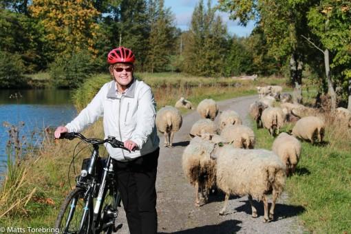Detta var fåren autopista